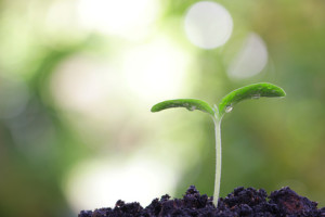 growing plant shoots from coaching